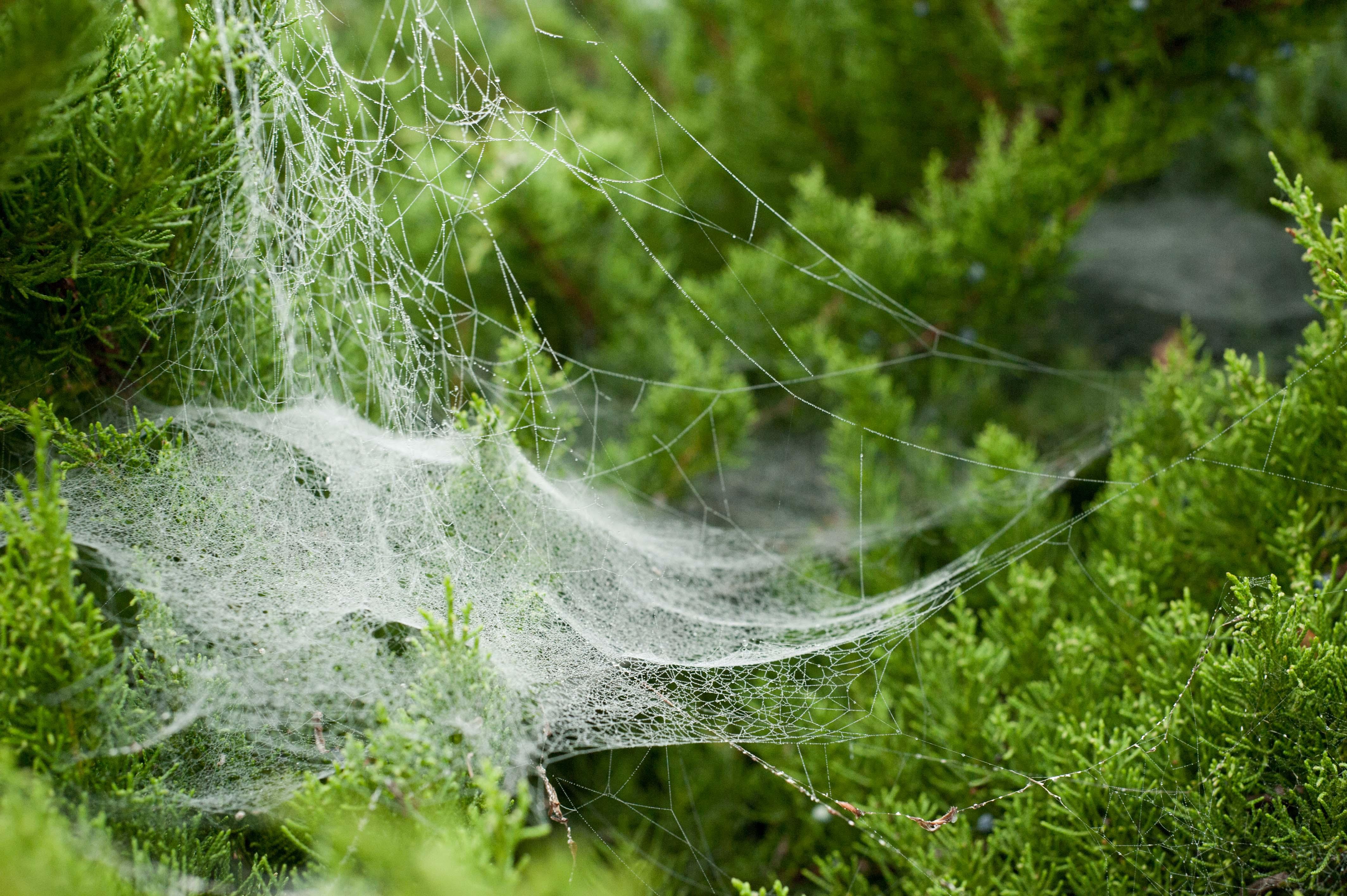 Graziella von Spinnweb