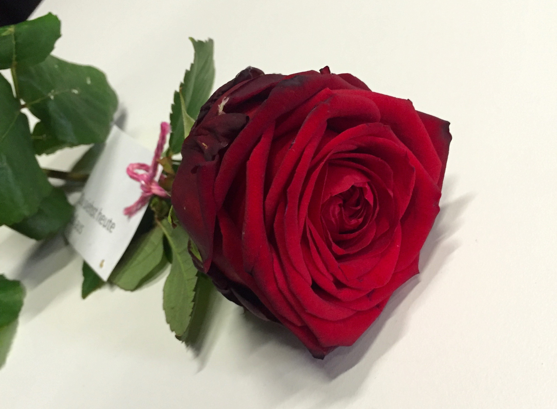 Am Schluss bleibt eine letzte Rose. Auch sie fand noch einen Besitzer.